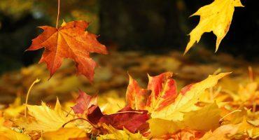 Herfst, meer energie in het najaar